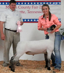 Show Lamb Results - Tennessee
