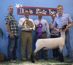 Illinois State Fair Market Lamb Results