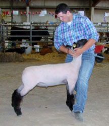 Kansas Show Lamb Results