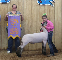 Ohio State Fair Market Lamb Results
