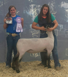 Wyoming State Fair Market Lamb Results