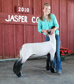 Indiana Show Lamb Results