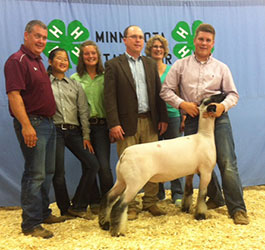 MN Show Lamb Results